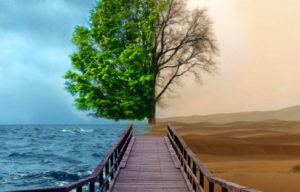 foto-albero-doppio-cut